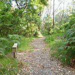 Narrow seat on the Galgabba Point walk (387035)