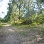 Loop track on Galgabba Point walk near Swansea (387083)