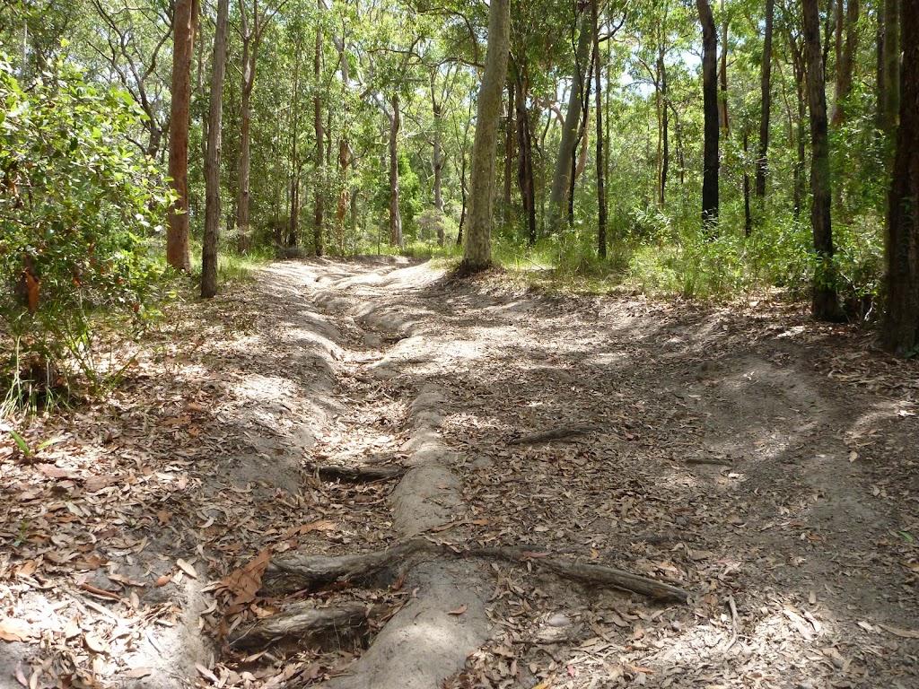 Steep eroded trail on the Wallarah Pennisula