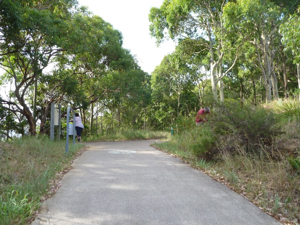 Eucalypt forest, Green Point Reserve