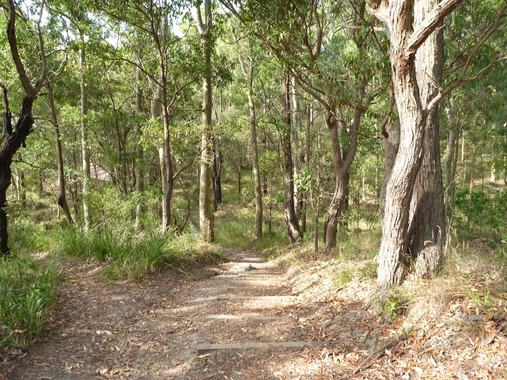 Track through forest in Green Point Reserve