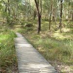 Timber boardwalk in Green Point Reserve (389606)