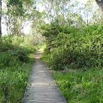 Timber boardwalk near Green Point on Lake Macquarie (389648)