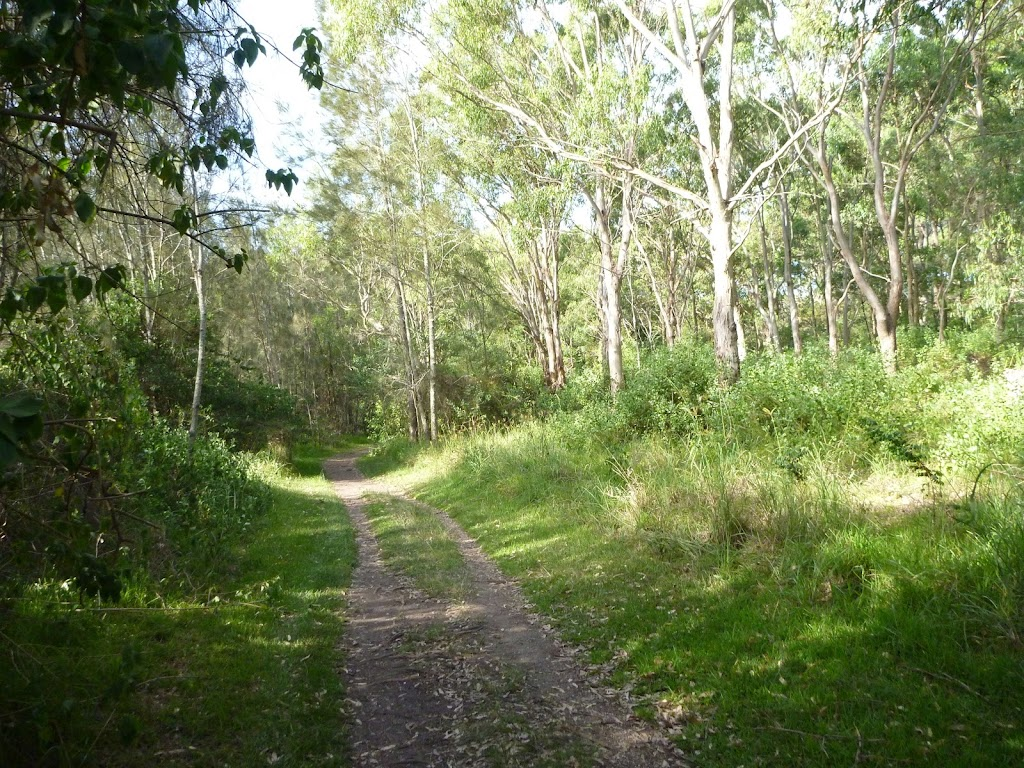 Trails through the eucalypt forest