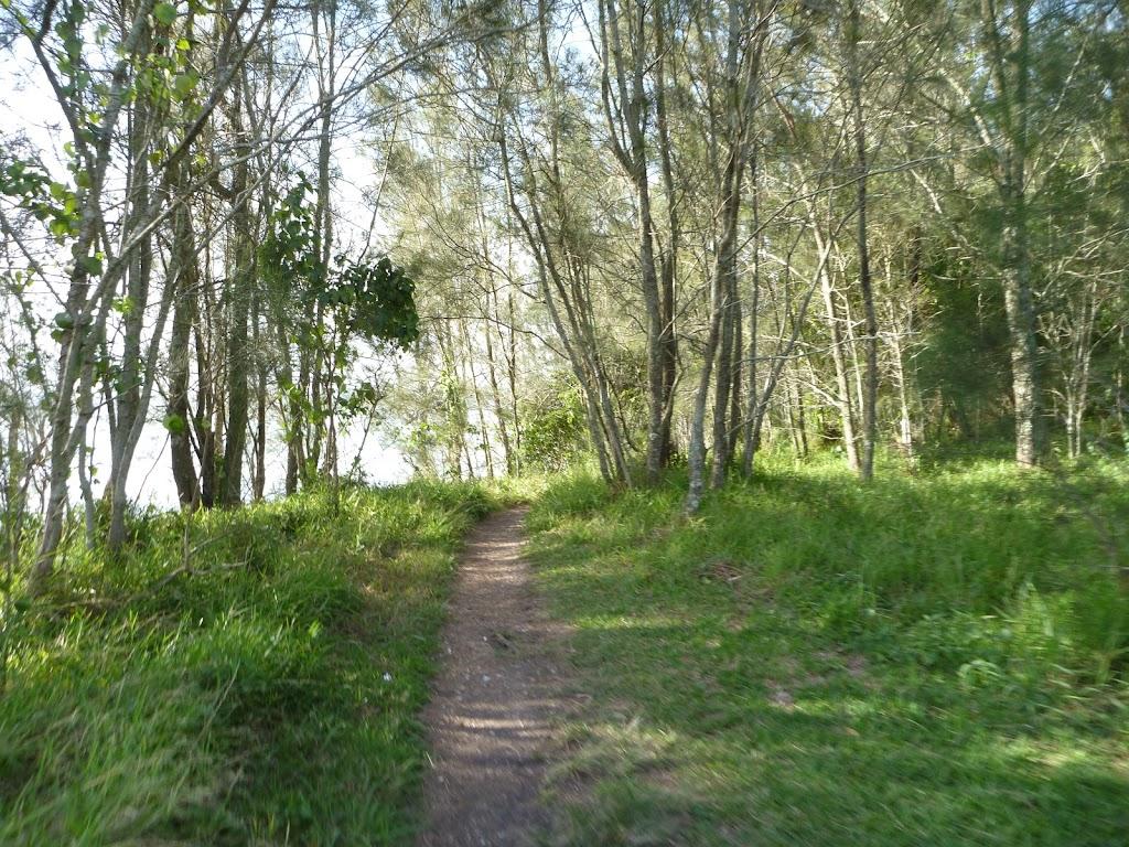 She Oak trees on Green Point, beside Lake Macquarie