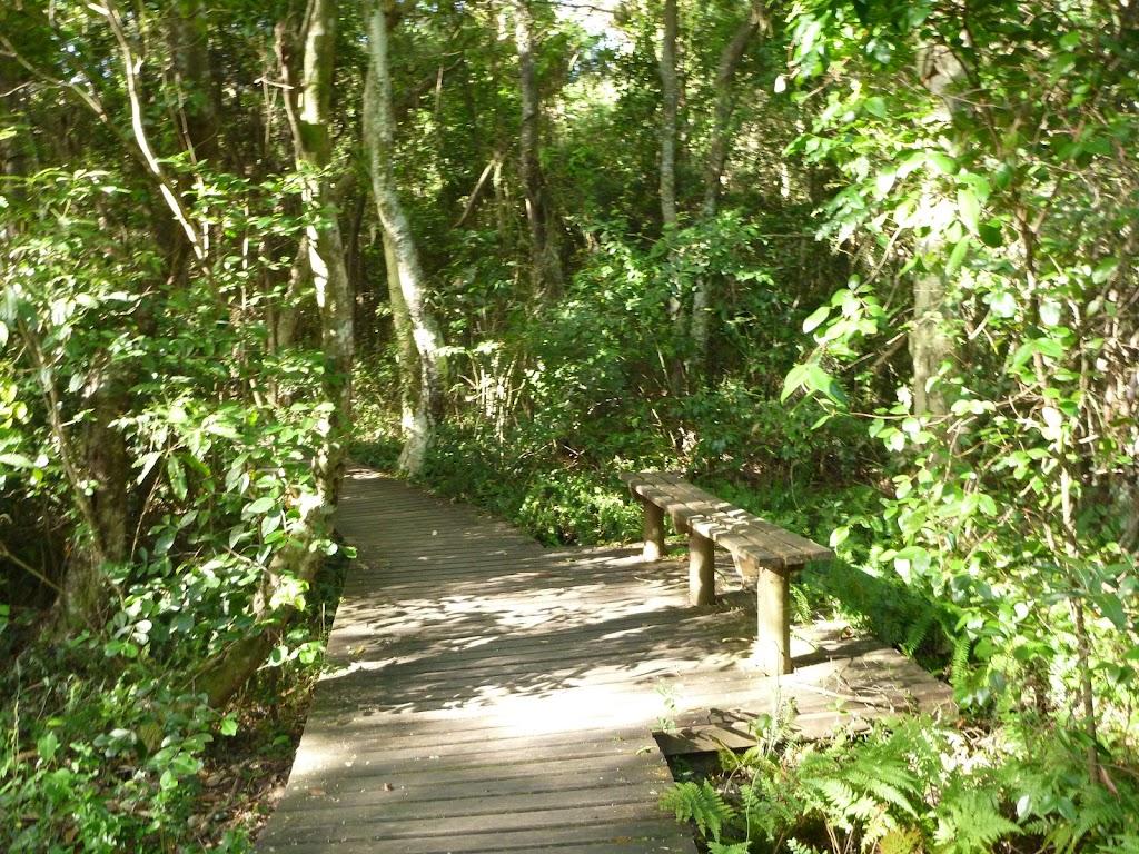 Boardwalk through eucalypt forest