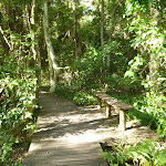 Boardwalk through eucalypt forest (389795)