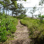 Stepped timber tracks with Lake Macquarie in the distance (389870)