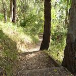 Bush steps near Rocky-high view point