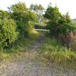 Track to foot bridge at Belmont Lagoon (390119)