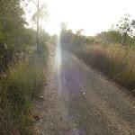 Narrow trail at Belmont Lagoon (390164)