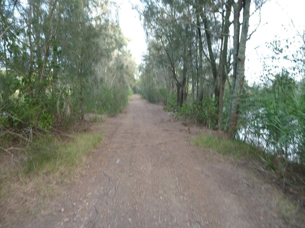 Tree's beside the trail in Belmont Lagoon