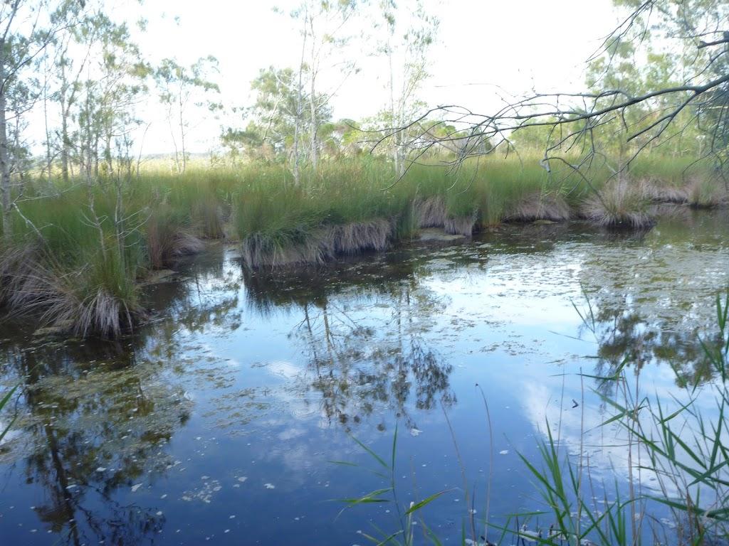 Still swampy pool near the spit in Belmont Lagoon