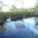 Still swampy pool near the spit in Belmont Lagoon (390353)