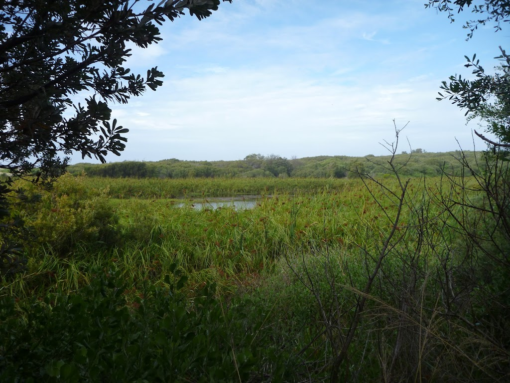 View of Wetlands on the Owens Walkway in Redhead
