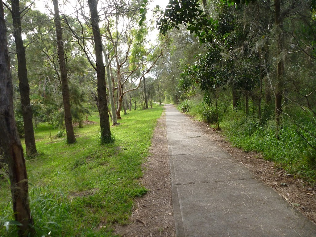 Forest with footpath on the Owens Walkway in Redhead (390935)