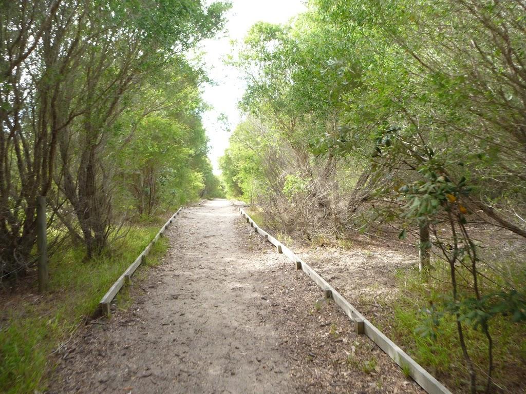 Track in coastal forest near the Owens Walkway