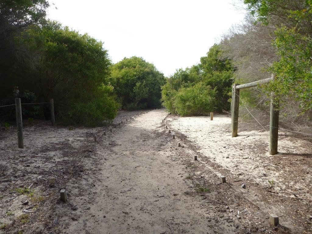 Sandy track near the Owens Walkway in Redhead (391040)