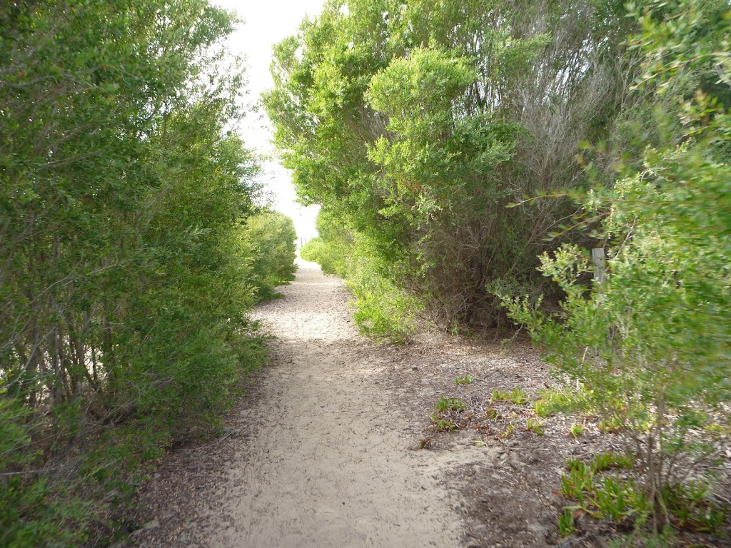 Sandy track through vegetation on Redhead Beach