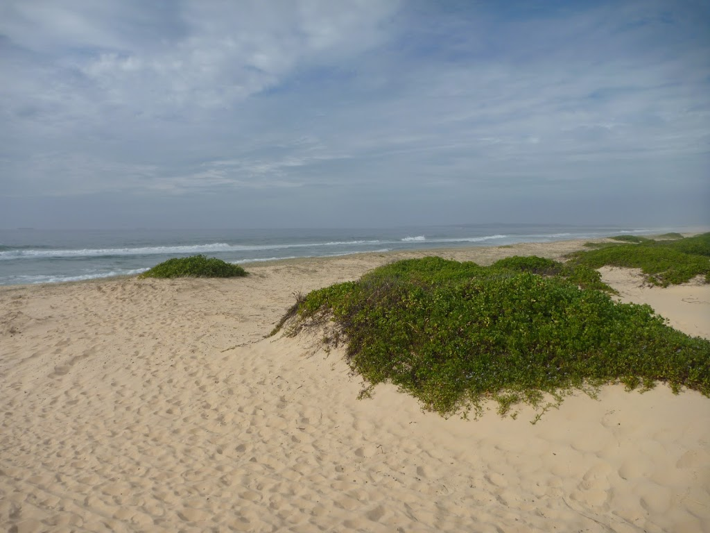 Sand and vegetation with the Redhead Beach in the background