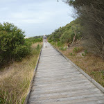 Timber boardwalk on the Owens Walkway in Redhead (391184)