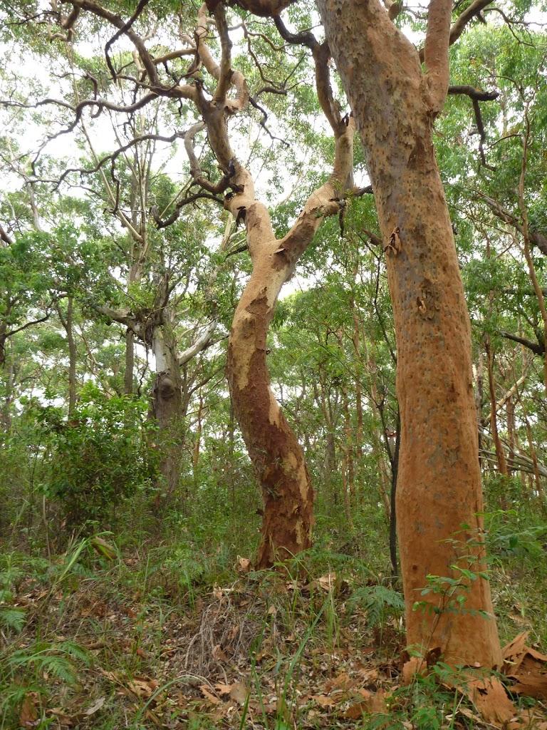 Attractive forest near the Awabakal car park
