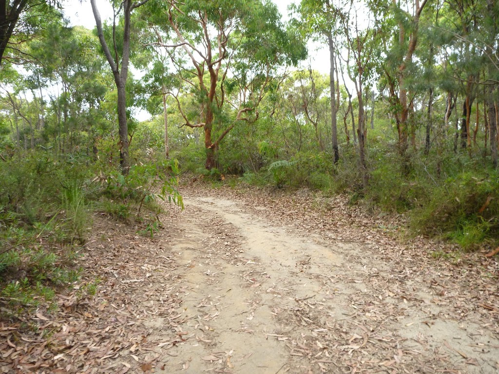 Uphill trail in the Awabakal Nature Reserve (391736)