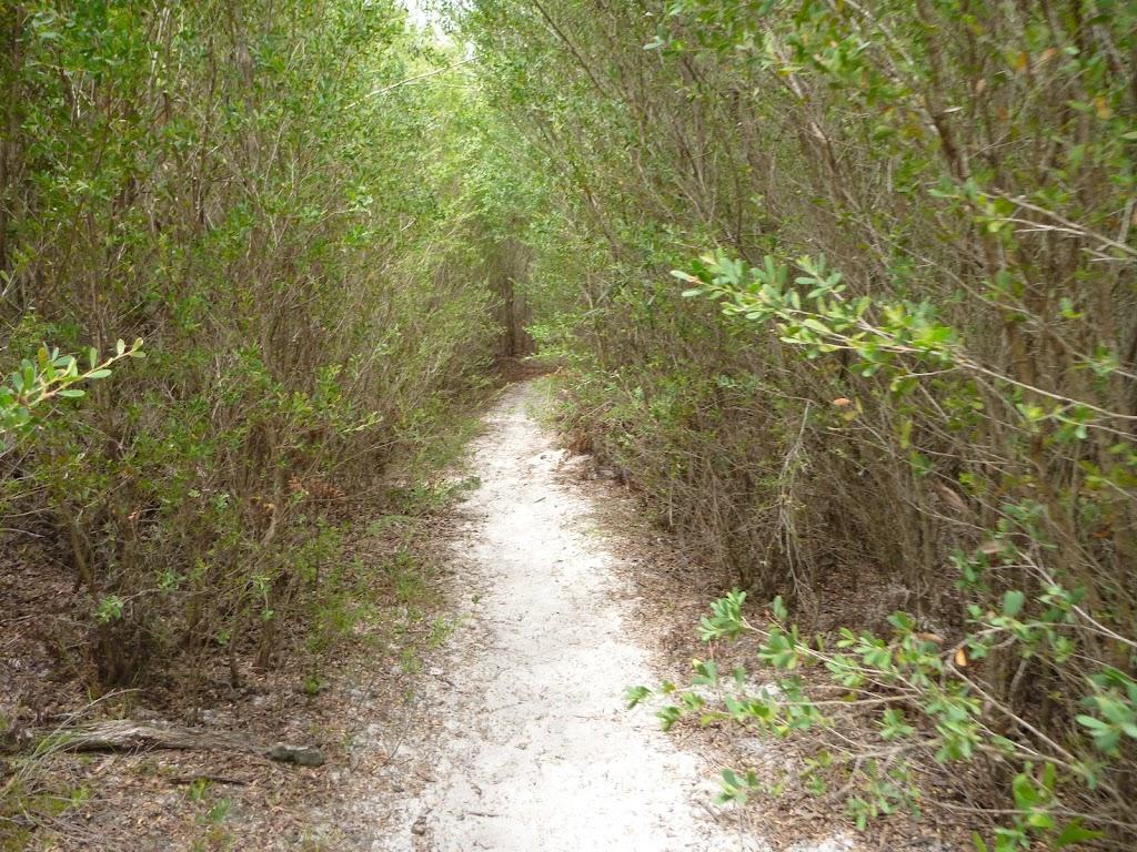 Track through forest on the Awabakal Coastal Walk