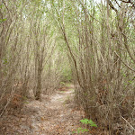 Track through forest on the Awabakal Coastal Walk (391865)