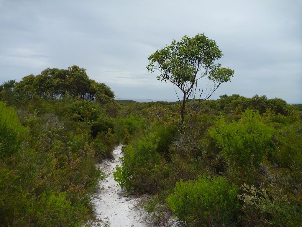 Views across the Awabakal Nature Reserve