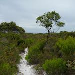Views across the Awabakal Nature Reserve (391889)