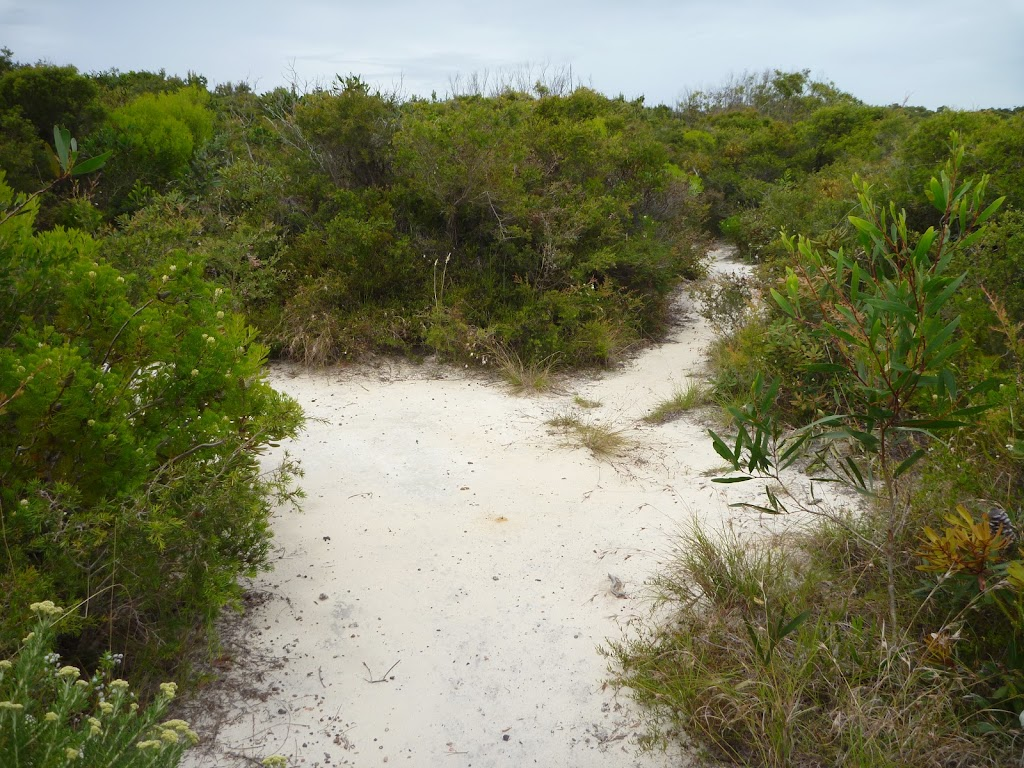 Intersection of track in the Awabakal Nature Reserve