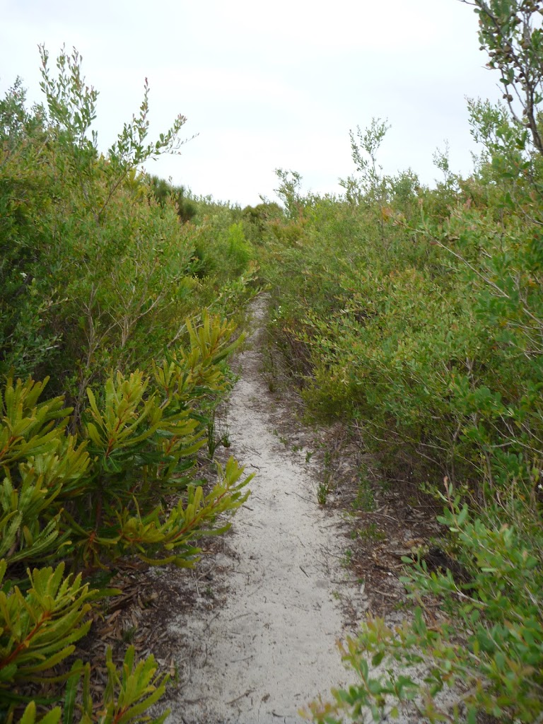 Overgrown track on the Awabakal Coastal Walk in the Awabakal Nature Reserve (391979)