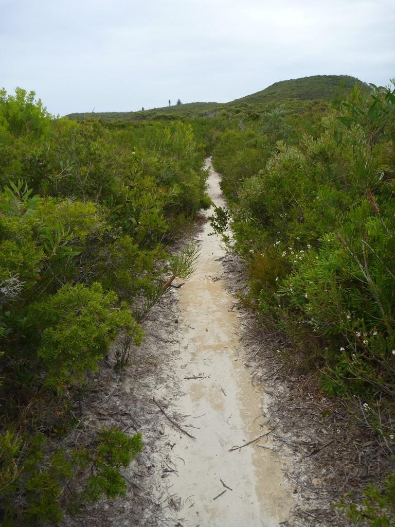 Sandy track through heath on the Awabakal Coastal Walk