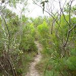 Track through vegetation in the Awabakal Nature Reserve (392096)