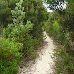 Track on the Awabakal Coastal Walk (392120)