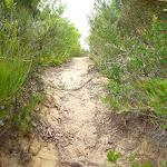 Uphill sandy track on the Awabakal Coastal Walk (392171)