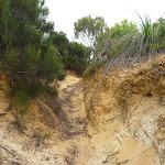 Sandy and eroded track on the Awabakal Coastal Walk (392219)