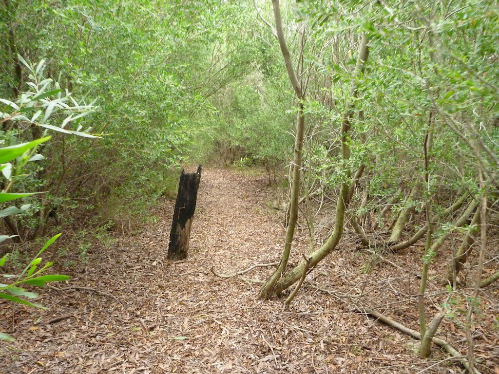 Leafy track near Collier St in Redhead in the Awabakal Nature Reserve