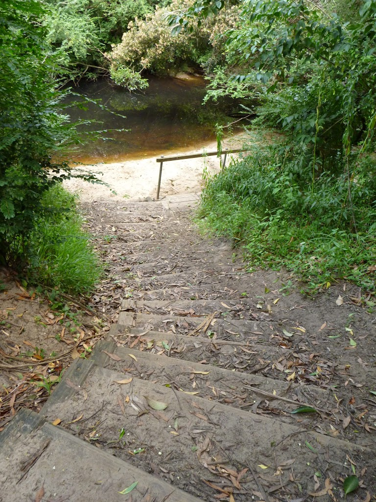 Walking down to Lane Cove River near Avondale Creek