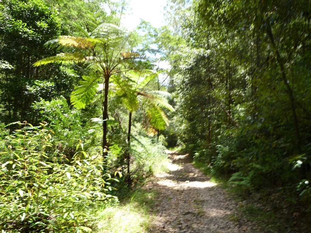 Fern trees and moist forest in the upper Lane Cove Valley
