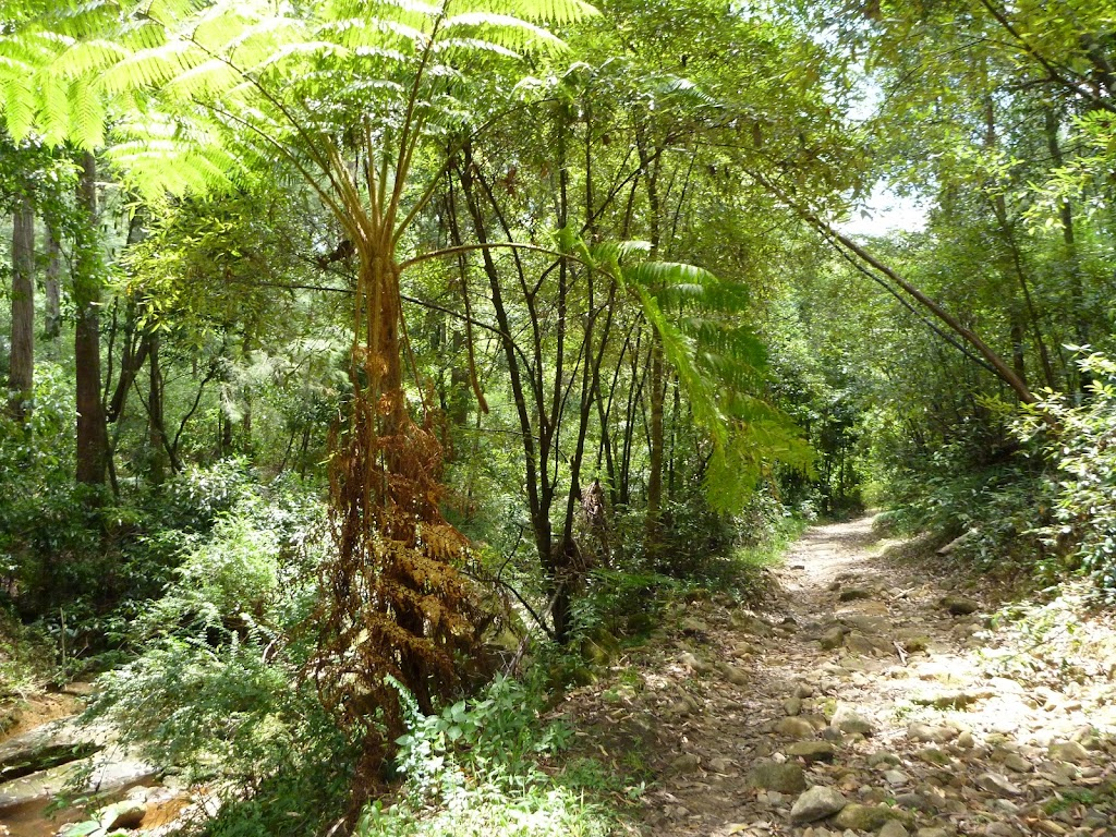 The rocky trail beside the upper Lane Cove River