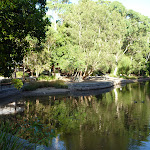 Black Duck pond in the Carnley Reserve in the Blackbutt Reserve