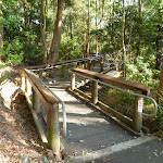 Timber boardwalk into Wildlife Exhibit at Blackbutt Reserve (399370)