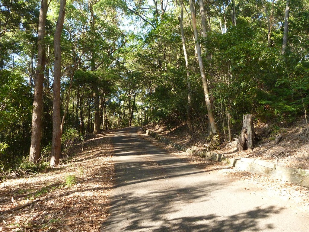Sealed trail towards the rainforest in Blackbutt Reserve (399400)
