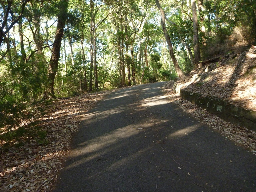 Trail in the Blackbutt Reserve