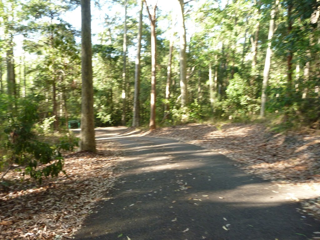 Sealed trail going downhill in the Blackbutt Reserve (399433)