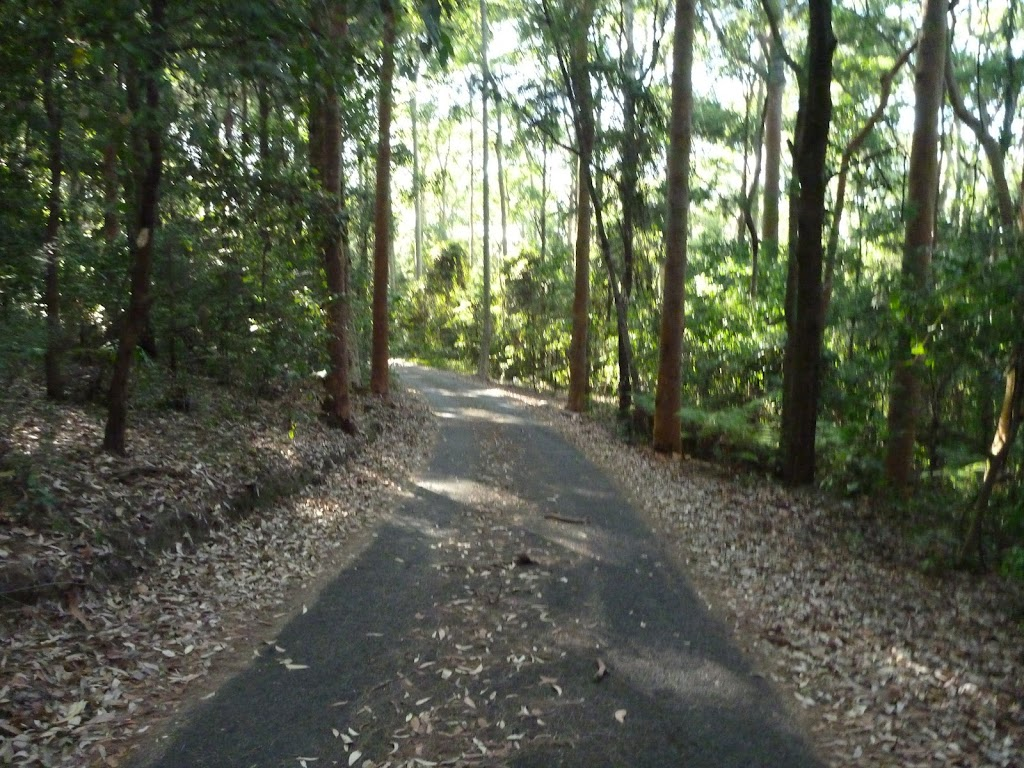 Leafy trail in Blackbutt Reserve