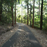 Leafy trail in Blackbutt Reserve