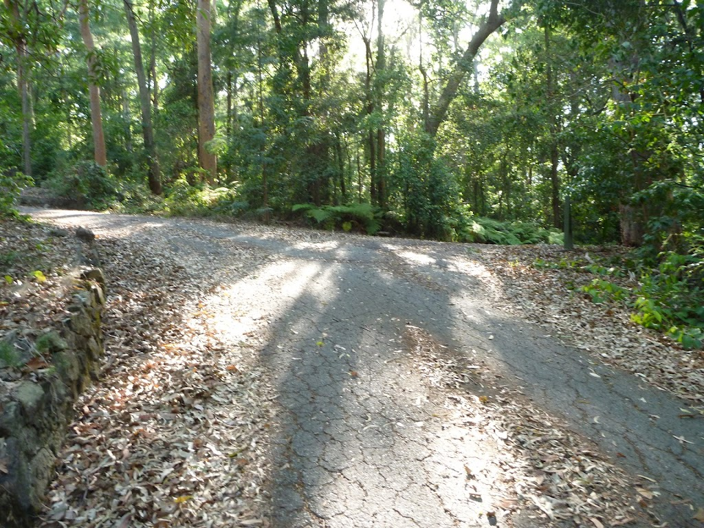 Sealed trail in the Blackbutt Reserve (399589)